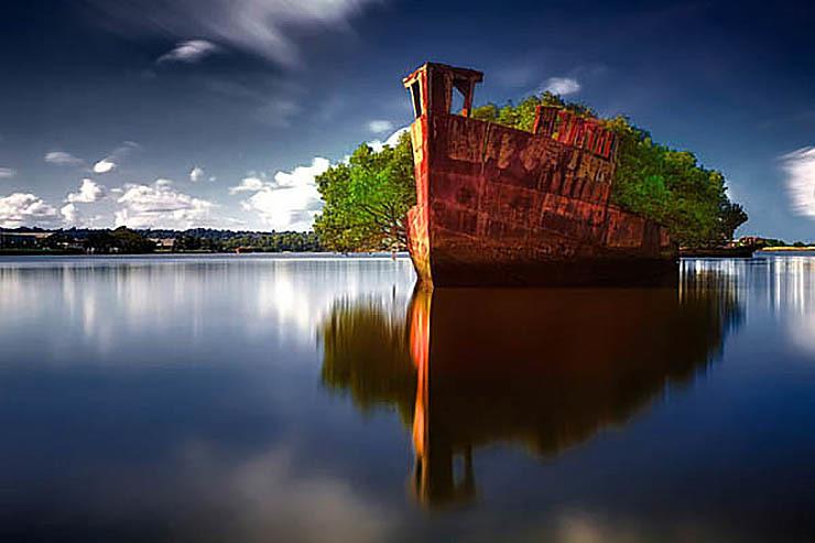 オーストラリア シドニー 浮かぶ森.jpg